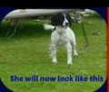 PUP POSSIBLE RECENT SIGHTING ON BBC TODAY from PL24 (South West) - click to find out more