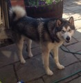 VINNIE SIGHTED from BS20 (South West) - click to find out more