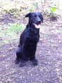 MAX MISSING FOR ONE YEAR from BB4 (North West) - click to find out more