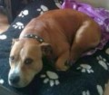 BUSTER from OL12 (North West) - click to find out more