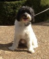 JAKE HELP NEEDED from CO13 (South East) - click to find out more