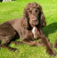MAX from RH19 (South East) - click to find out more