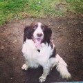 BUSTER from DN1 (North East) - click to find out more