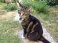 TOBY SIGHTED 14 SEPT from TQ9 (South West) - click to find out more