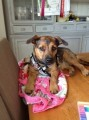 DAISY from RH5 (South East) - click to find out more
