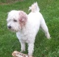 GIZMO from CB8 (East Anglia) - click to find out more