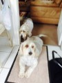 SONNY AND  CHER from PL27 (South West) - click to find out more