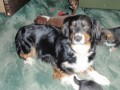 RUBY from EX5 (South West) - click to find out more