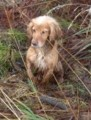 CHARLIE from BA12 (South West) - click to find out more