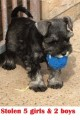 7 PUPPIES from S66 (North East) - click to find out more
