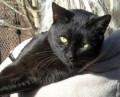SWEETIE from LU2 (East Anglia) - click to find out more