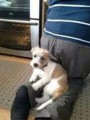 PENNY from BD8 (North East) - click to find out more