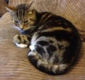 TIGGER from FY6 (North West) - click to find out more