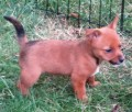 SAFFY from SN7 (South East) - click to find out more