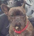 ALFIE from MK19 (South East) - click to find out more