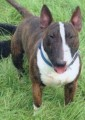 RAFA from BD13 (North East) - click to find out more