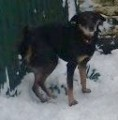 BARNEY from SK15 (North West) - click to find out more