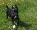 RUFUS from G44 (Scotland) - click to find out more