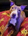 ROXY from PL2 (South West) - click to find out more