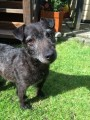 PEGGY from SE9 (South East) - click to find out more