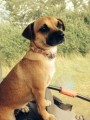 CHUGGY from LN8 (East Anglia) - click to find out more