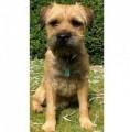 TAV HEARD BARKING LOUDLY SEE THREAD BELOW from SO24 (South East) - click to find out more