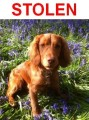 NELSON from GU6 (South East) - click to find out more