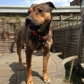 PRINCESS from N9 (South East) - click to find out more