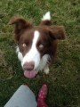 BARNEY from DL8 (North East) - click to find out more
