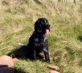 TILLY STILL MISSING from CA11 (North West) - click to find out more