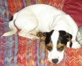 ARCHIE from RG20 (South East) - click to find out more