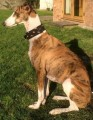 INIGO MISSING AGAIN from TA9 (South West) - click to find out more