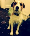 TAFFY from LL32 (Wales) - click to find out more