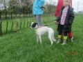 POPPY  from G71 (Scotland) - click to find out more