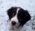 SKYE from LA9 (North West) - click to find out more