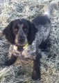 HARVEY from GL11 (South West) - click to find out more