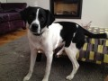 ALFIE from CF14 (Wales) - click to find out more