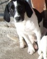 BELLE from LN11 (East Anglia) - click to find out more