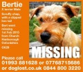 BERTIE from OX29 (South East) - click to find out more
