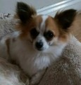 MARLEY from DN21 (East Anglia) - click to find out more