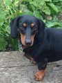 BUDDY from OL16 (North West) - click to find out more