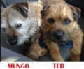 MUNGO AND TED from GU8 (South East) - click to find out more