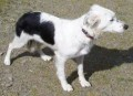 2 COLLIES from KA7 (Scotland) - click to find out more
