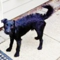 RUSTY from GU10 (South East) - click to find out more