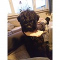 LOLA from PR4 (North West) - click to find out more
