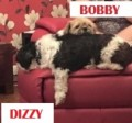 DIZZY AND BOBBY from HR8 (Central) - click to find out more