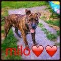 MILO from KY2 (Scotland) - click to find out more