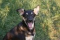MIA CAN NEW OWNERS GET IN TOUCH PLEASE from DH2 (North East) - click to find out more
