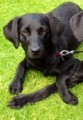 GRACE SIGHTING from LS25 (North East) - click to find out more