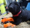 RINGO from ML2 (Scotland) - click to find out more